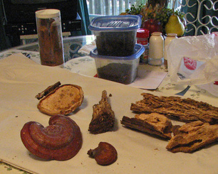 Photo of fungi and pieces of wood on table.