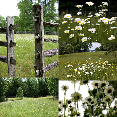 Montage of four photos of meadow habitat with flowers and wooden fence