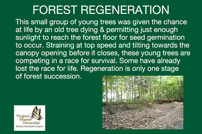Interpretive sign with photo of small trees in forest, Virginia Master Naturalist logo, and text reading