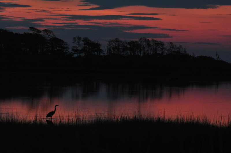 Orange and pink sunset sky over marshland with wading bird in foreground