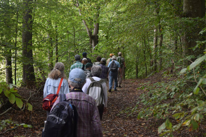 group of people walking single file on a forest trail