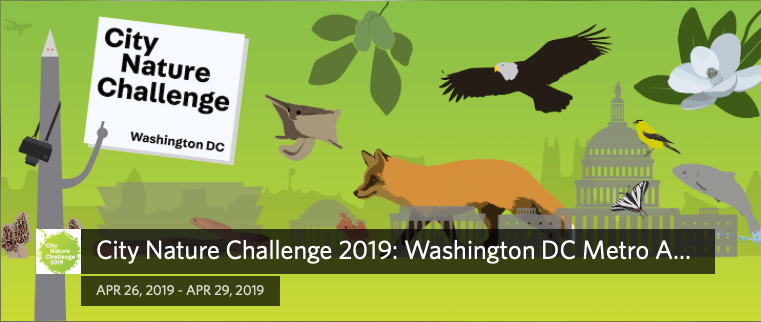 City Nature Challenge 2019: Washington DC Metro Area logo with plants and animals in foreground and US Capitol in background