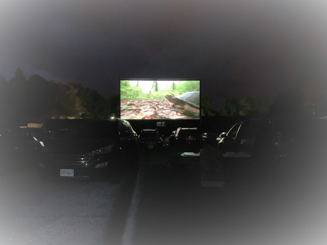 cars lined up at a drive-in movie, with a close-up of a turtle on the movie screen